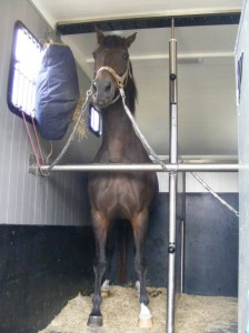 Anaïs in the trailer on the way to the vet