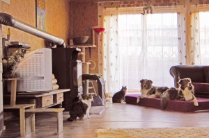 Part of Sabine and Frank's menagerie