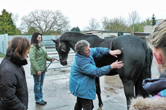 Belet feeling The Equine Touch at Lyn Palmer's capable hands