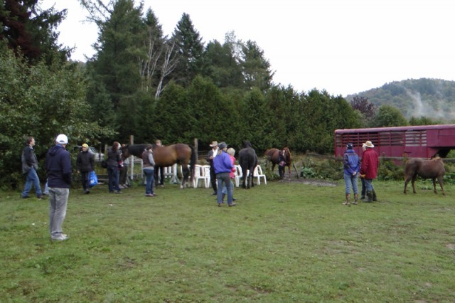 Horses and humans meeting at the NHE seminar