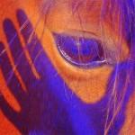 corroboree-equus_logo