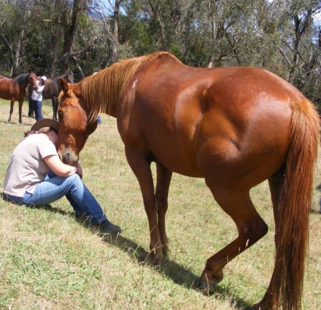 Horses and Humans - towards the Corroboree Equus