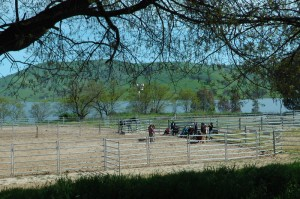 The inaugural Corroboree Equus on the banks of Lake Hume