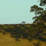 horse-on-hill2