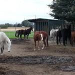 back-in-the-herd-sm