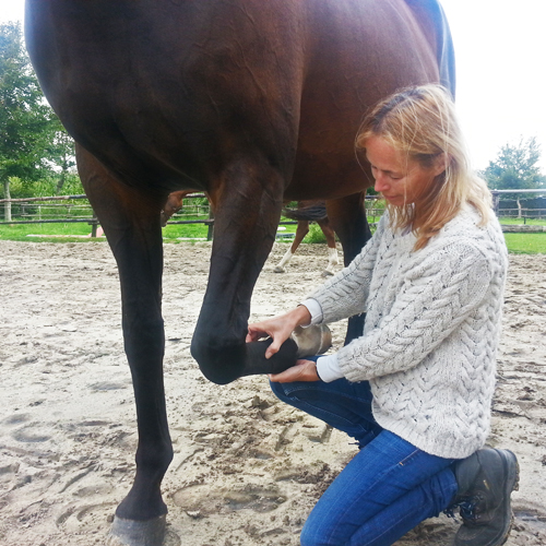 Vicki performing Equine Touch on Anaïs. A move I perform on Pip for her tendon.
