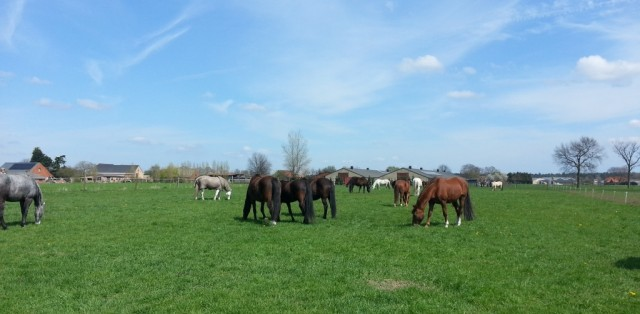 """Our mares in the herd at he 4Horses Creek """"natural horsemanship"""" yard"""