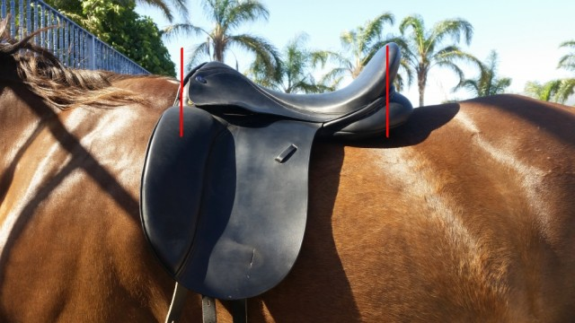 Pip's former saddle is too big. Although the left shoulder is clear, the right one is compressed.