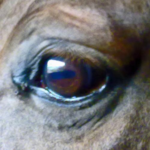 pip-eye-500