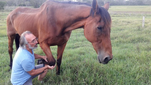 Helping our old boy, Gulliver, with Equine Touch