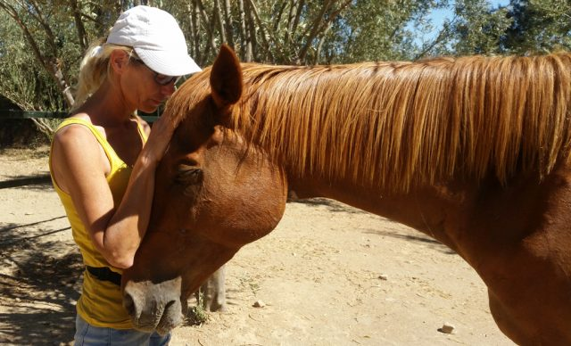 Indio with Vicki after an Equine Touch session
