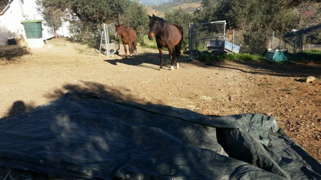 The mares and the billowing tarp
