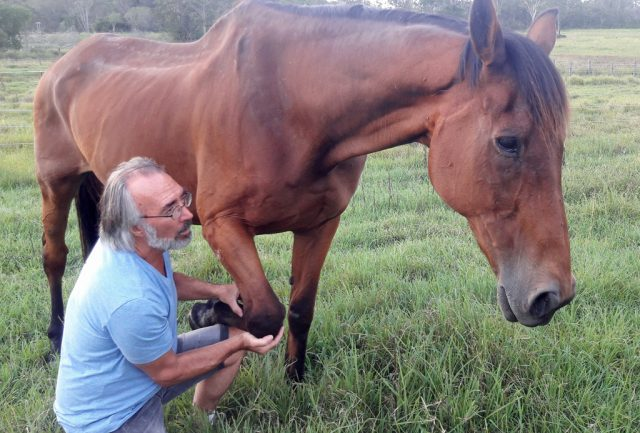 Our old boy, Gulliver, also loved The Equine Touch until he left us