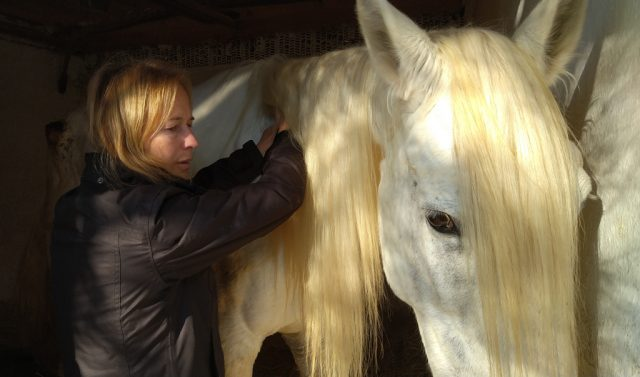 Vicki and Soberano have always shared The Equine Touch at liberty