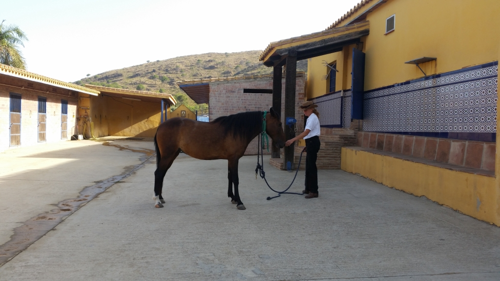 The lead becomes an umbilical cord between horse and human